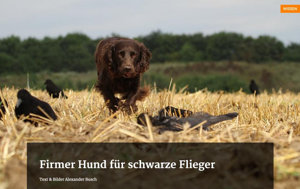 Firmer Hund für schwarze Flieger