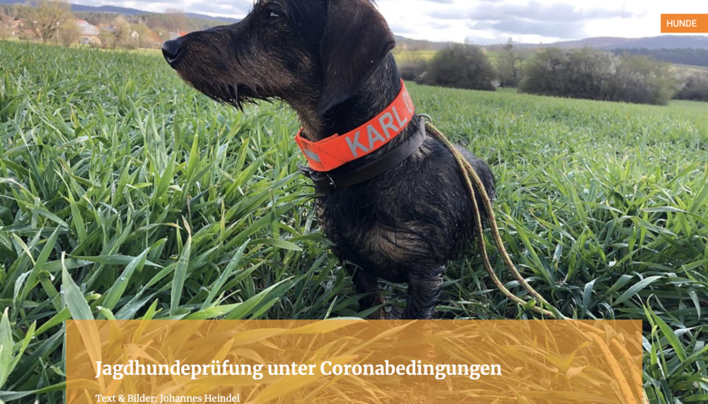 Jagdhundeprüfung unter Coronabedingungen