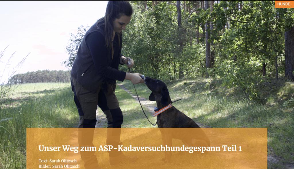 Unser Weg zum ASP-Kadaversuchhundegespann