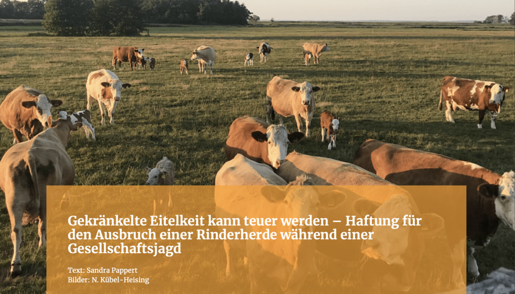 Gekränkelte Eitelkeit kann teuer werden – Haftung für den Ausbruch einer Rinderherde während einer Gesellschaftsjagd