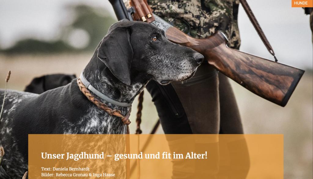 Unser Jagdhund – gesund und fit im Alter!
